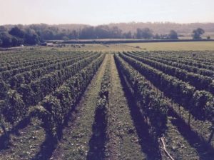 vineyard-from-insty